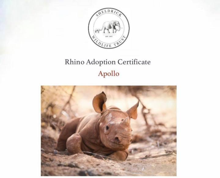 Adoptovala jsem nosorožčí mládě jménem Apollo |příběh